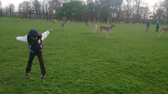 Phoenix Park: Nice to see you