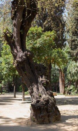 Jardin Jnan Sbil : Разнообразные деревья
