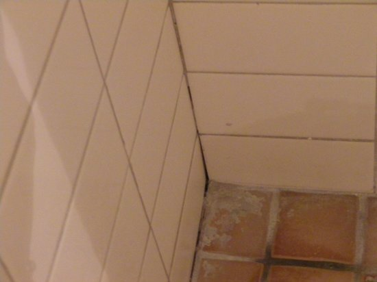 Ibis Styles Alice Springs Oasis : mouldy tiles