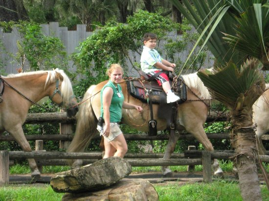 ZooTampa at Lowry Park: Pony Rides at the LPZ