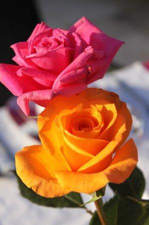 Riad Siwan: Roses at breakfast...