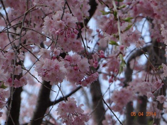 Ueno Park: прелестно