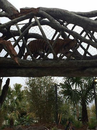 New Tiger Exhibit Picture Of Jacksonville Zoo Gardens Jacksonville Tripadvisor