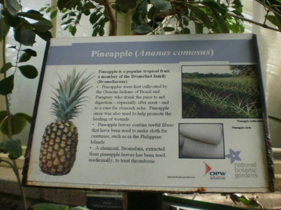 National Botanic Gardens: Pineapple description