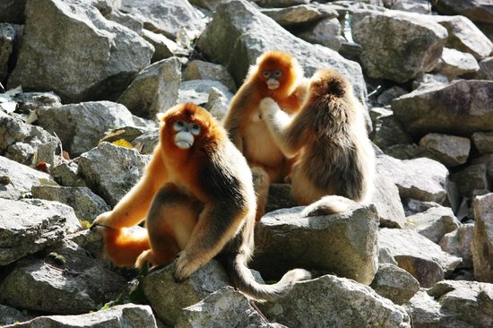 Shanxi Foping National Nature Reserve: group of monkeys