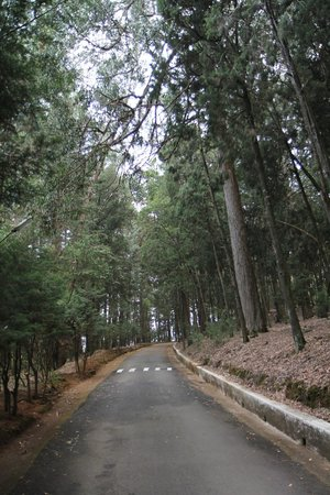 Ratan Tata Officers Holiday Home (RTOHH): Tall Pine and eucalyptus trees, some of them over a hundred years old.
