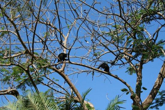 Hotel Mamiri: Monkeys on the premise