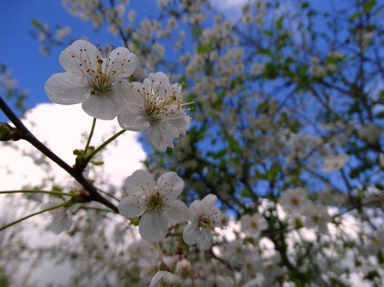 Il Borgo Sulla Collina B&B: primavera