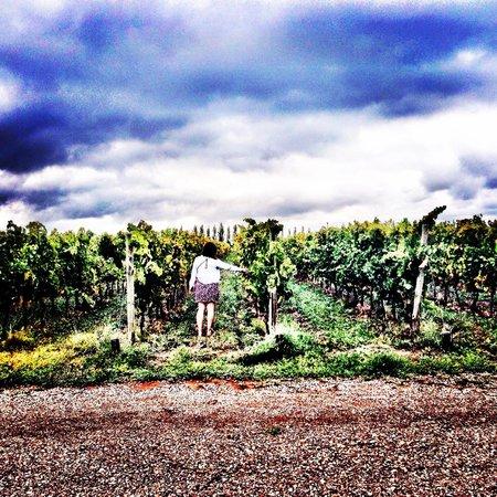 Ampora Wine Tours: Last vineyard after lunch
