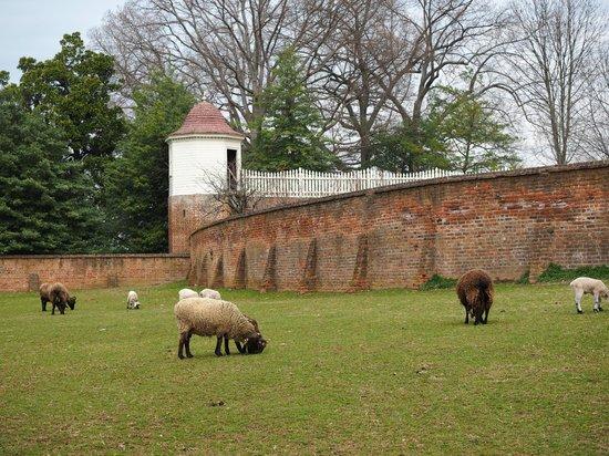 George Washington's Mount Vernon: The paddock