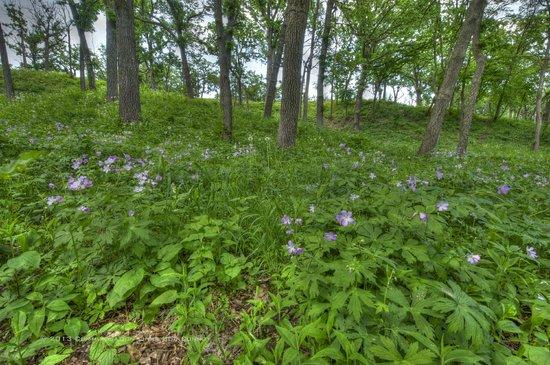 Minnehaha Park: The natural beauty of Minnesota - specifically Minneapolis in abundant.