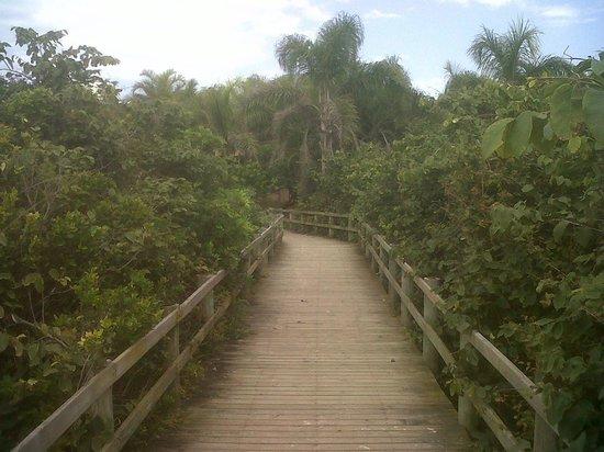 Jurere Internacional: passarelas para praia de Jurerê