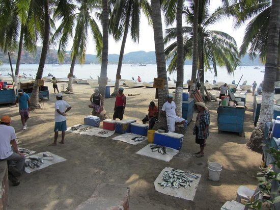Hotel Solimar Inn Suites: Zihuatanejo fishermen's morning catches