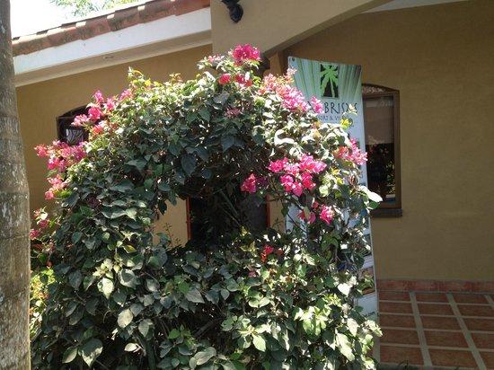 Las Brisas Resort and Villas : Some of the beautiful greenery @ the resort