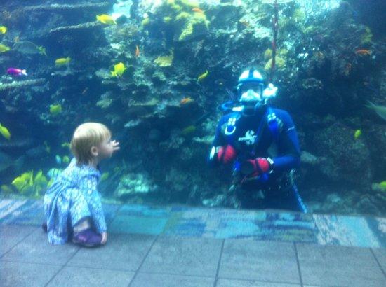 Georgia Aquarium: Close encounters