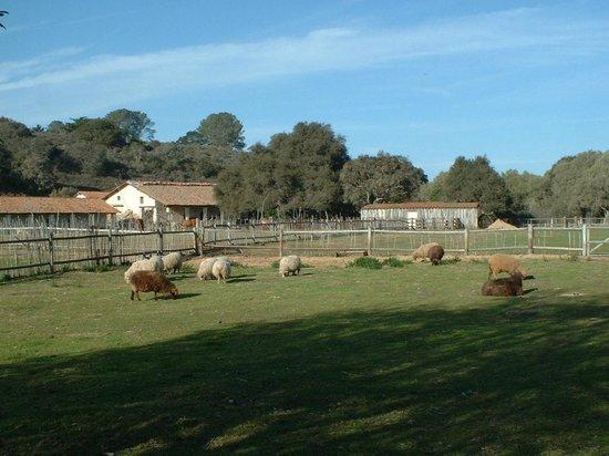 La Purisima State Historical Park: Animals at La Purisima