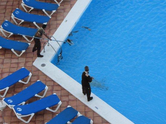 Sol Tenerife: Pulizia giornaliera della piscina