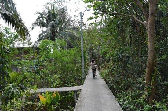 Recreational Bangkok Biking : Jungle