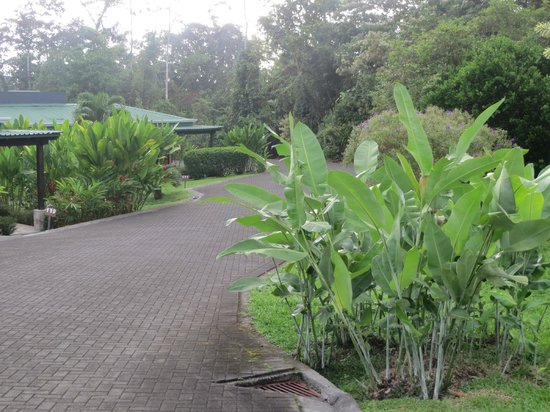 Arenal Manoa Hotel : HOTEL'S BEAUTIFUL GROUNDS
