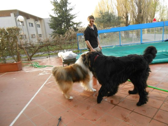 Residence Ranieri : Cani ben accetti