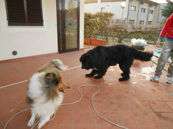 Residence Ranieri : Gioco di Fata con il cane del proprietario