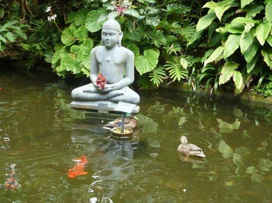 Marie Selby Botanical Gardens: Koi pond