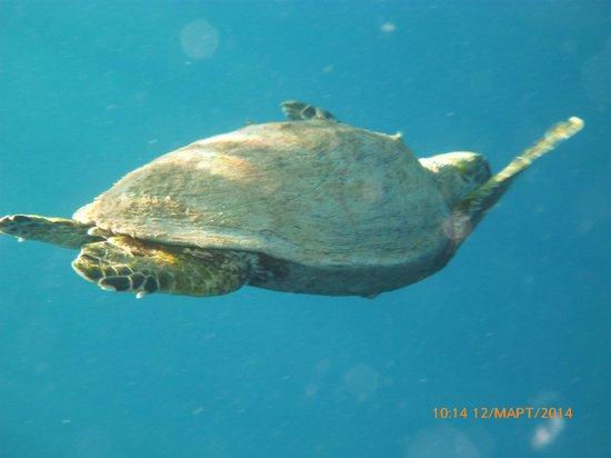 Port Ghalib Resort: черепаха