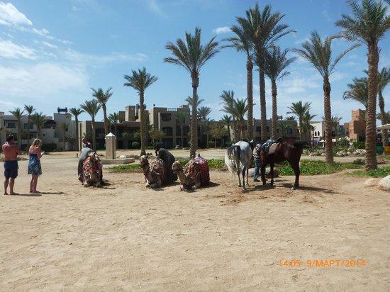 Port Ghalib Resort: на пляже