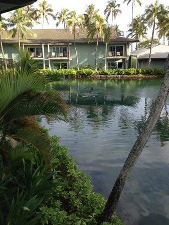 The Kahala Hotel & Resort: dolphin lagoon area