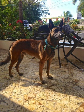 Malecon House: The owners Lovely dog, Coqui