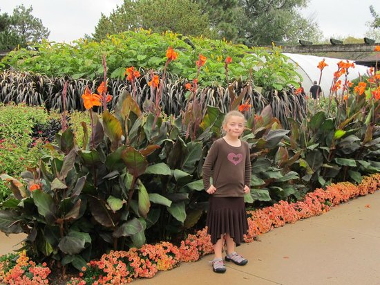 Botanica: The Wichita Gardens: Canna Lillies At Botanica