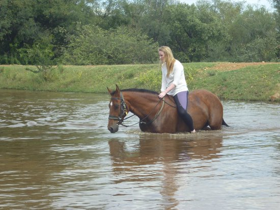 Ant's Hill & Ant's Nest : Swimming with the horses was wonderful!