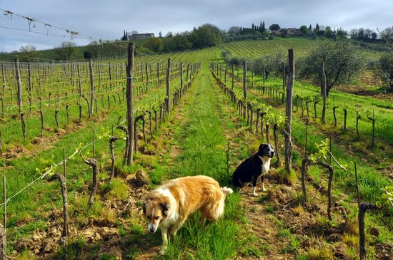 Az. Agricola Casina di Cornia: Les gardiens de Casina