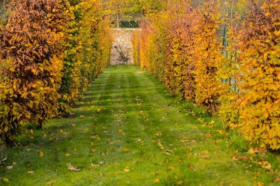 Charmilles des Cordeliers : Les charmilles à l'automne
