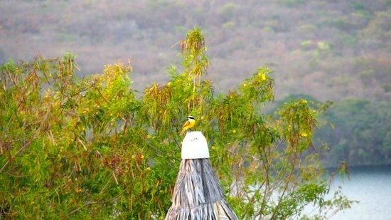 Hacienda Puerta Del Cielo Eco Spa: birds