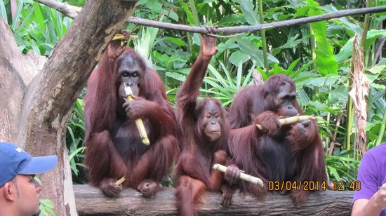 Singapore Zoo: Сингапурский зоопарк