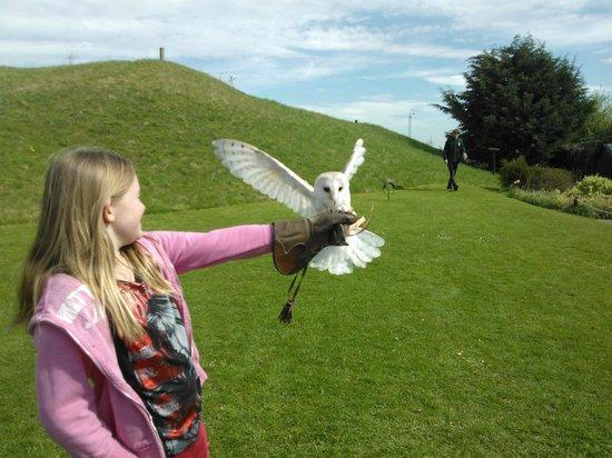 Lightwater Valley Theme Park: owl;handling- retrieving food