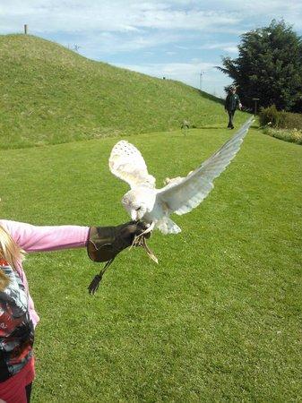 Lightwater Valley Theme Park: Barn Owl