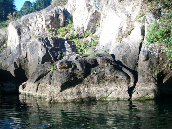 Millennium Hotel and Resort Manuels Taupo : Lizard in the rocks