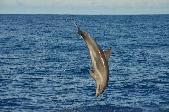 Fancy II Whale Watching: Dolphin seen from Fancy II