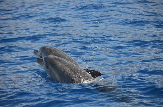 Fancy II Whale Watching: Dolphins from Fancy II