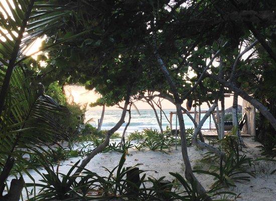 La Chan Cabanita: View from Cabin