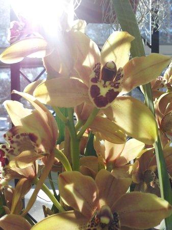 Denver Botanic Gardens : Orchid exhibit
