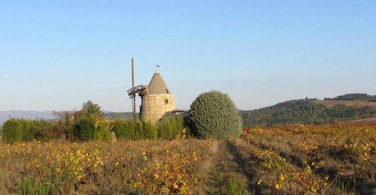 Parc Naturel Regional du Luberon: luberon