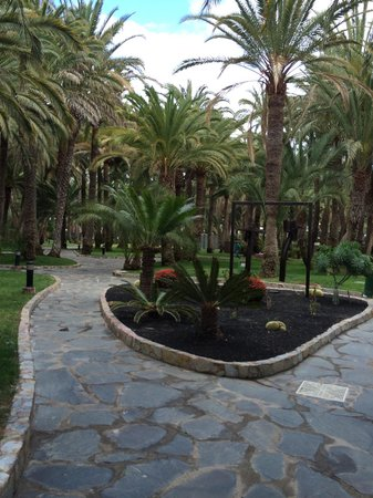 Hotel Riu Palace Oasis: Hotel grounds