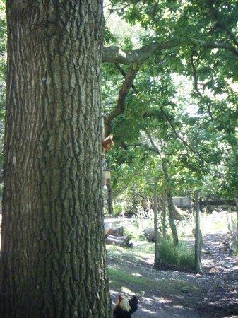 Brownsea Island: red squirrel feeding station.