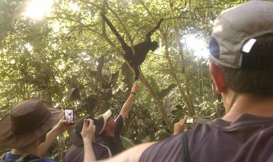Ecoamazonia Lodge: Monkey Island