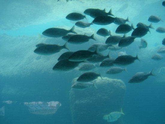 The Cove Atlantis, Autograph Collection : aquarium