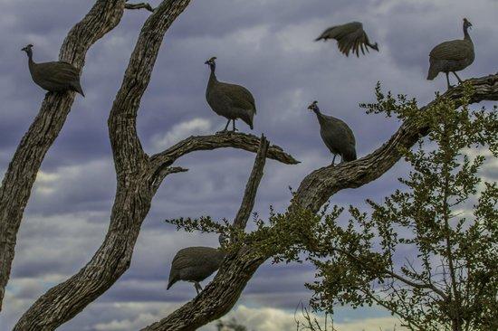 Jaci's Tree Lodge: Wild fowl