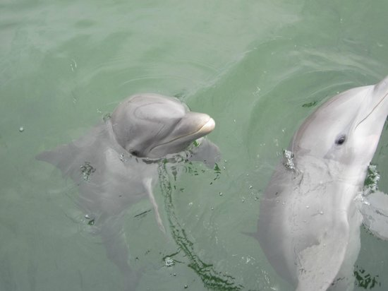 Sol Sirenas Coral Resort: we went dolphin playing